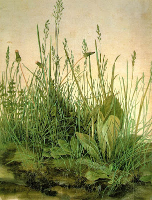 Durer's detailed watercolor of plants in a small earthen patch