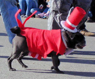 Dog in red tux, with top hat, white tie and tails, three.