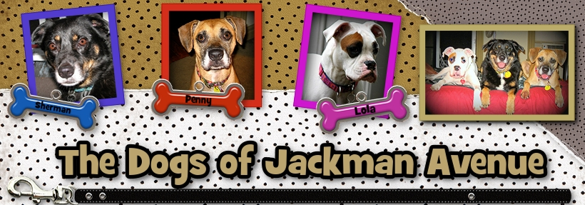 The Dogs of Jackman Ave