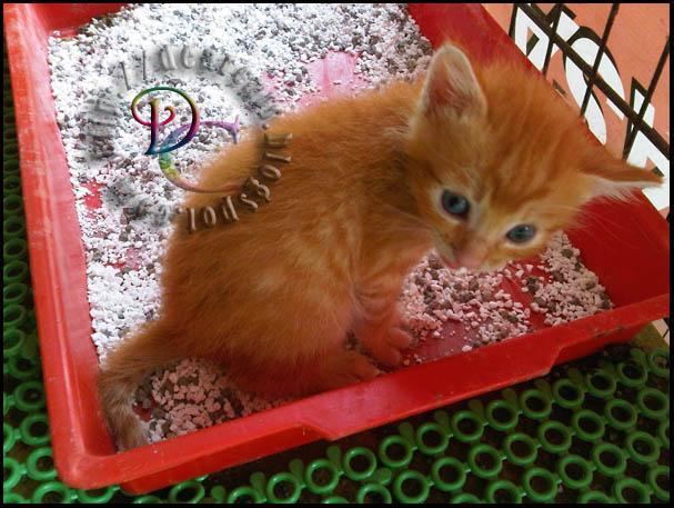 Kucing Suka Duduk Dalam Litter Box Q A Mengapa Kucing