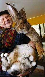 กระต่ายตัวใหญ่ที่สุดในโลก