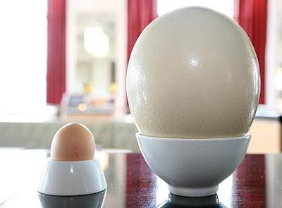ไข่นกระจอกเทศ เทียบ ไข่ไก่