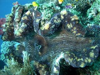 หอยใหญ่