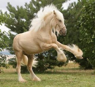ม้าสายพันธุ์สวยที่สุด