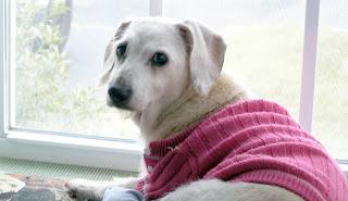สุนัข อายุมากที่สุดในโลก