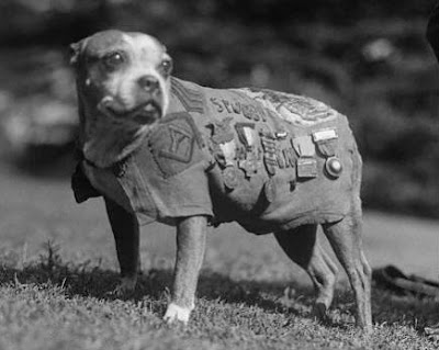 สุนัขสงคราม