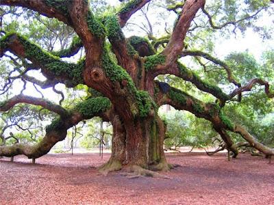 ต้นไม้ใหญ่ ต้นไม้ศักดิ์สิทธิ์