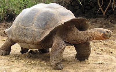 เต่า สัตว์ที่อายุยืนที่สุดในโลก