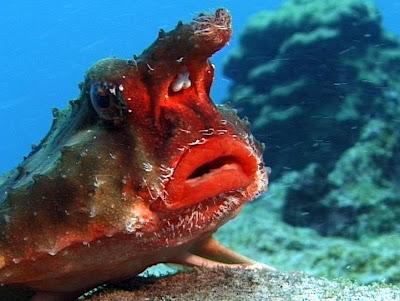 ปลาปากแดง