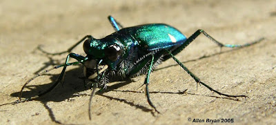 แมลง ที่ คลานเร็วที่สุดในโลก