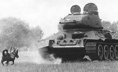 หมาระเบิด ทำลายรถถัง (Anti-Tank Dogs)