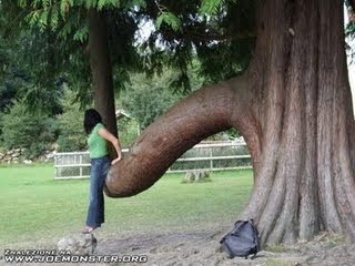 Funny Adult Tree