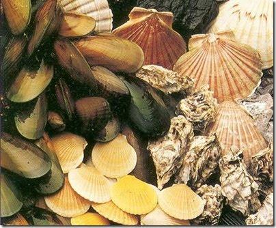 Bivalve shellfish