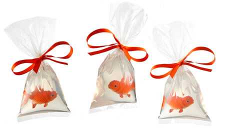 Pet Fish Soap