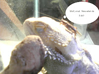 Picture of a bearded dragon with a cricket on its head.  Bearded dragons eat crickets.  The cricket has a thought balloon saying, 'Oh crud.  Now what do I do?'