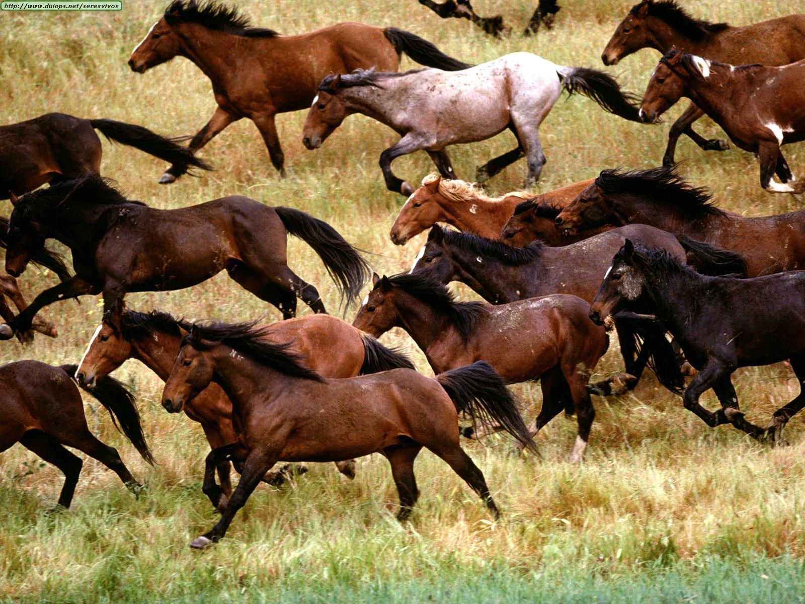 heard of horses