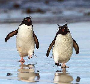 penguins penguins