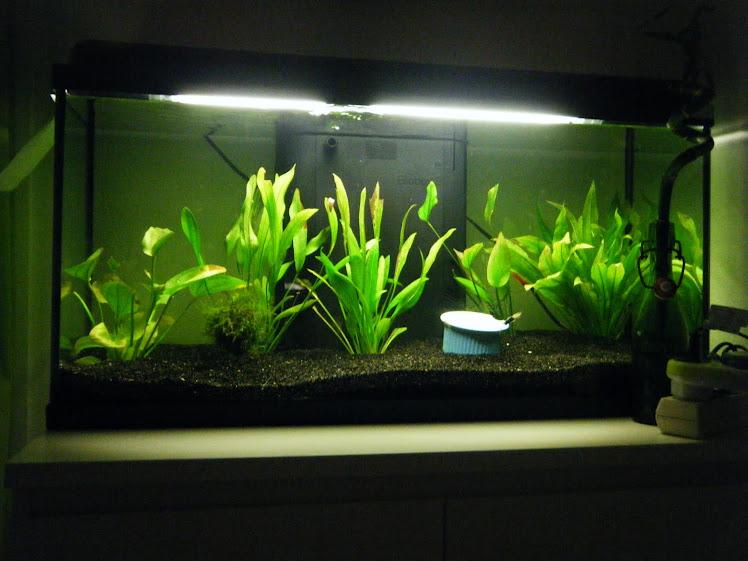 La mises en place de mon aquarium 90l for Terreau aquarium