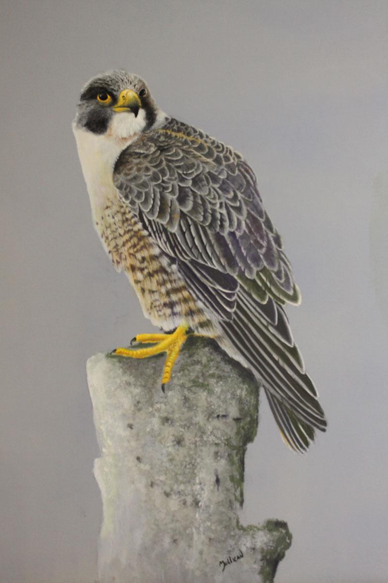 Falcon art