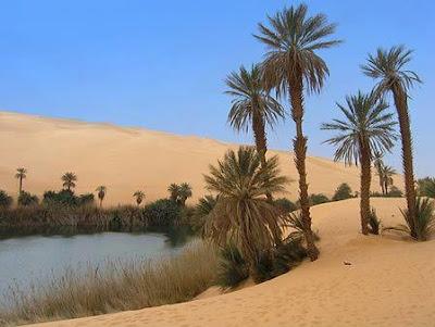 Lybian oasis