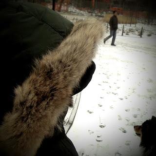 Canada Goose kids online authentic - Walking Off the Big Apple: City Life in Winter: Nanook, Arctic ...