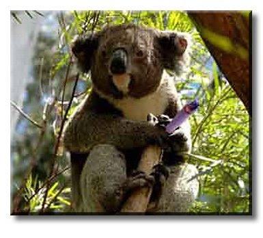 Koala smoking a joint