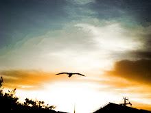 flying bird by junim bra Budidaya Adenium dan Cara Menanamnya