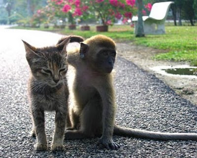 cat-and-monkey - Best Friends  - General Topic