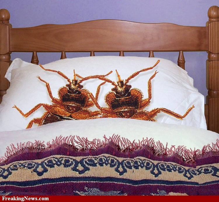 Funny Bed Bug Pictures Bangdodo