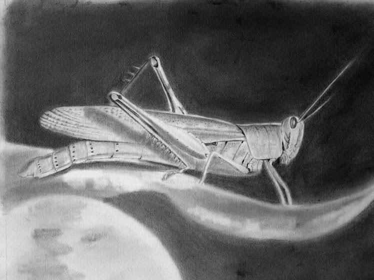 Ahhh Grasshopper