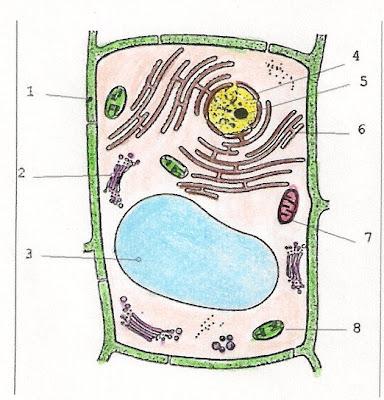 imagenes de celula vegetal. images Las células vegetales