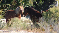 Wild Mustangs