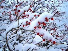 Winter Arrives In December