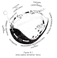OUROBOROS, A Teia da Vida