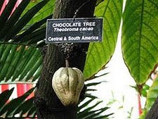 Chaya De Cacao - Life Of Chocolate