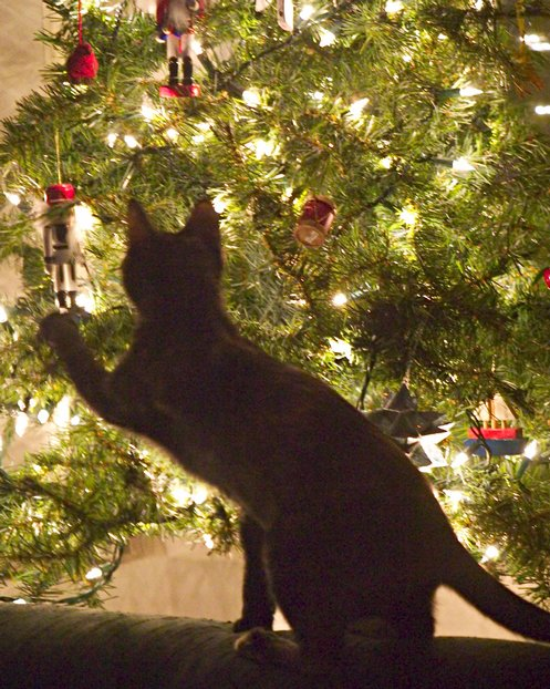 Christmas christmas eve starring loretta young Christmas tree cat tower