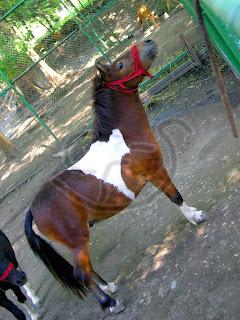 Galerie foto cu cai!! IMG_9532