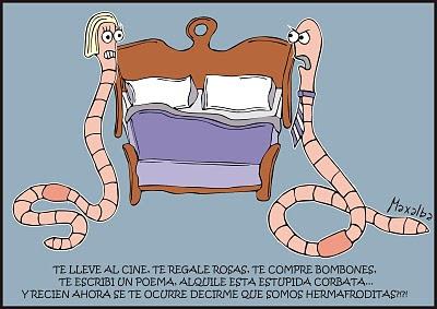 hermafroditas