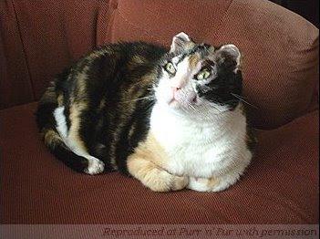 Кошатинские - Страница 5 Cat_scarlett2008-1