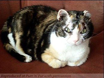 Кошатинские - Страница 5 Cat_scarlett2008-2