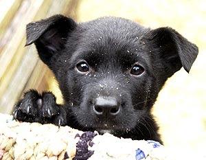 Бездомные животные будут жить в Дарницком районе