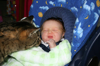 cat tickles baby