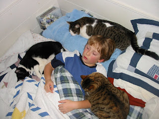 child and 3 cats