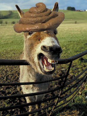 donkey-big+poop+hat.jpg