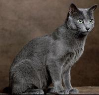 Chi è gumball il gatto imbranato che conquista grandi e piccoli