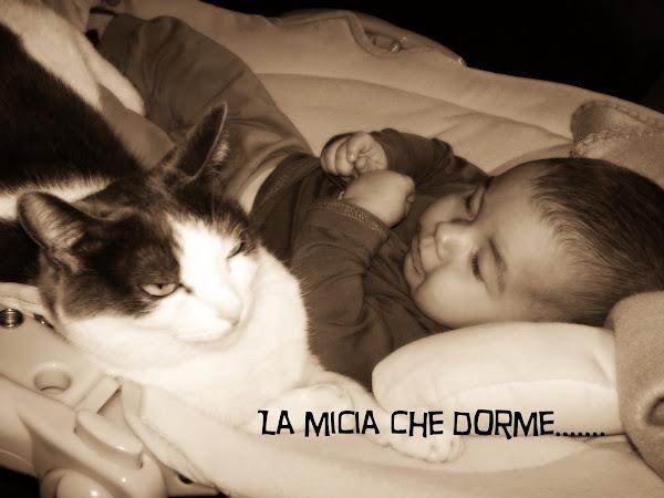 la micia che dorme.....