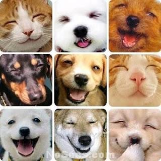 fotos de perros y gatos