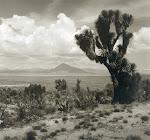 JUAN RULFO y sus fotos de los desiertos mexicanos flotan en la retina de Cardoso