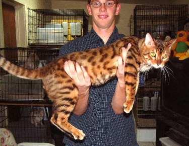 cat 6 vs cat 7 ethernet