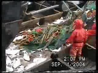 [trawler+bycatch+GOA+2004_11.jpe]